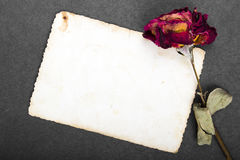 Dried red rose and blank photograph Stock Images