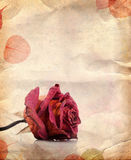 Dried red rose and leaves Stock Photography