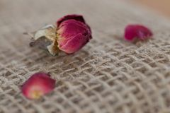 Dried Red Rose and Petals on Burlap Stock Photography