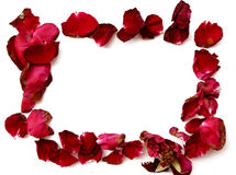Dried red rose petals frame on white background. Royalty Free Stock Images