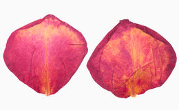 Dried red rose petals. On white isolated Royalty Free Stock Images