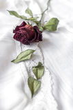 Dried red rose Stock Photo