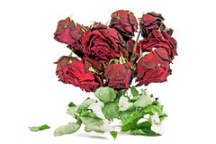 Dried red roses Stock Photos