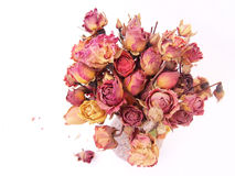 Dried Red Roses Royalty Free Stock Image