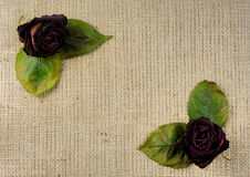 Dried Red Roses Background Stock Photos