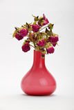 Dried red roses in pink vase on white background Royalty Free Stock Photos