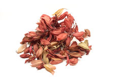 Dried red salvia seeds Stock Photos