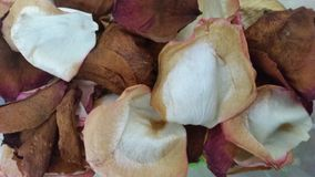 Dried red and white rose petals stock photos