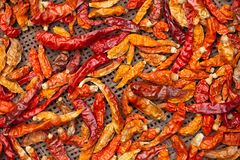 Dried red and yellow chilli on threshing basket royalty free stock photos