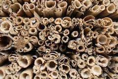 Dried reed tubes closeup. Macro closeup of hollow reed tubes royalty free stock photo