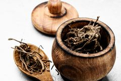 Valerian herb root royalty free stock image