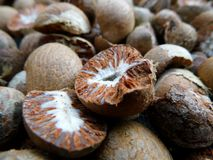 Dried ripe areca nut royalty free stock image