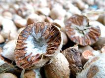 Dried ripe areca nut Royalty Free Stock Photo