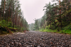Dried river in the Siberian outback Stock Image