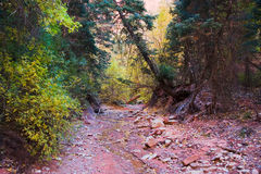 Dried Riverbed in Zion National Park. Fall in Zion National Park Utah with the leaves changing colors along a dried riverbed Royalty Free Stock Photography