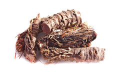 Dried root of Rhodiola rosea. Medical, isolation Royalty Free Stock Photos