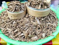 Dried Root Royalty Free Stock Photo