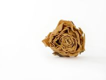 Dried rose. Yellow dried rose on a white background Royalty Free Stock Photo