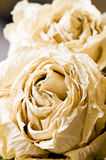 Dried rose Royalty Free Stock Photography