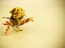 Dried rose. Stock Image