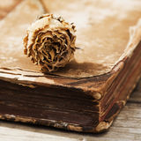 Dried rose on an antique book Stock Images