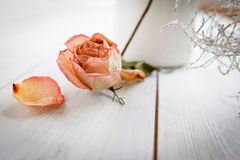 Dried Rose Blossom Royalty Free Stock Image