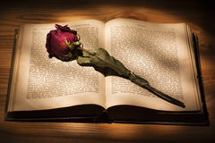 Dried Rose and Book Stock Image