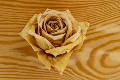 Dried rose bud on a wooden background stock photos