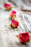 Dried rose buds Royalty Free Stock Images