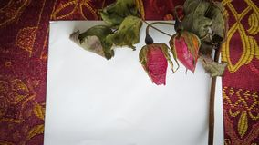 Dried rose buds and flowers with a card and room for text. Dried Roses on top of a white card for text Royalty Free Stock Photos