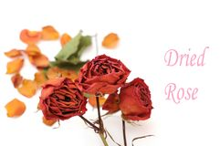 Dried rose and dried petal Royalty Free Stock Photo