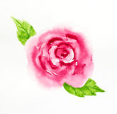Dried rose with falling petals on white. Background vector illustration