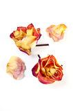 Dried rose flowers Stock Photos