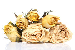 Dried rose flowers Stock Images