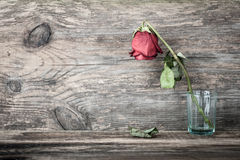 Dried rose. In glass on wooden table Royalty Free Stock Image