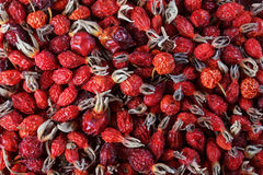 Dried rose hip, alternative medicine, close-up Royalty Free Stock Photo