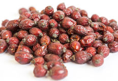 Dried rose hip briar Stock Image