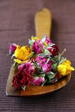 Dried rose hipson Royalty Free Stock Photos