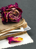 Dried rose, old book and empty photograph Stock Images