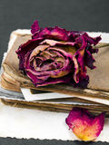 Dried rose, old book and empty photograph  Stock Photography