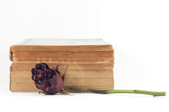 Dried Rose And Old Books On White Background. Dried rose and old books on white background, selective focus Stock Photo