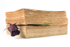 Dried rose and old books on white background. Dried rose and old books on white background, selective focus Royalty Free Stock Photos