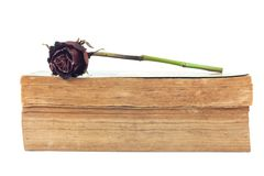 Dried rose and old books on white background. Dried rose and old books on white background, selective focus Royalty Free Stock Photography