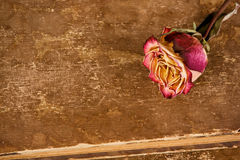 Dried rose on old leather Royalty Free Stock Photography