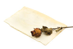 dried rose Stock Photo