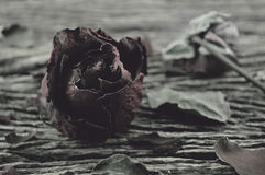 Dried Rose on old wooden background, broken heart concept Stock Image
