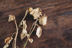 Dried rose on old wooden background. Vintage style. Royalty Free Stock Photography