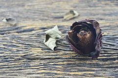 Dried Rose on old wooden board, broken heart concept Royalty Free Stock Image