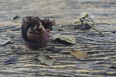 Dried Rose on old wooden board, broken heart concept Stock Image