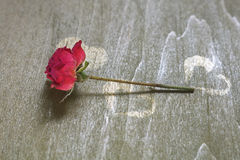 Dried Rose On The Green Wood Table Royalty Free Stock Images